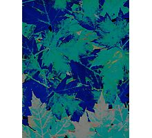 Blue & Green Autumn Leaves Photographic Print