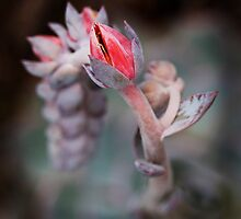 Succulent flower by Eleanor Godley