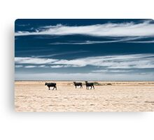 Black Cows Canvas Print
