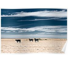 Black Cows Poster