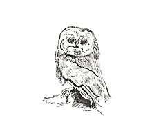 Owl pen and ink illustration Photographic Print