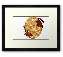 2 Squirrels Framed Print