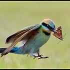 Rainbow Bee-Eater 453 by John Van-Den-Broeke