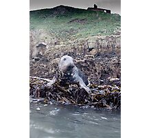 Seal at Puffin Island Anglesey Photographic Print