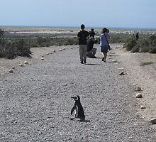 Caution: Penguin Crossing by SlenkDee