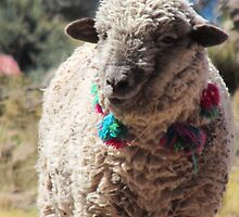 Sheep On Lake Titicaca by SlenkDee