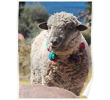 Sheep On Lake Titicaca Poster