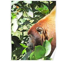 The Primate And His Lunch Poster