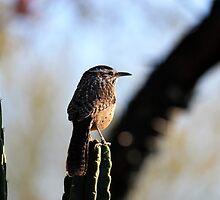 Bird on cactus by tdash