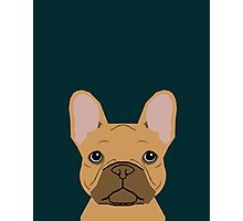 Willow - French Bulldog phone case art design for dog lovers and dog people Photographic Print