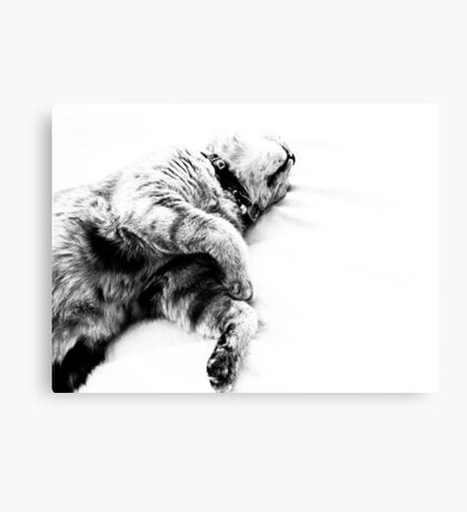 Fatty saved energy for celebrate time at soon...prr..rr.r..r On 2 Featured Works Canvas Print