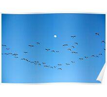 Many flamingos on the sky Poster