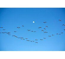 Many flamingos on the sky Photographic Print