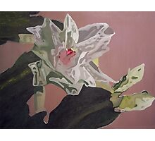 Christmas Blossom Print From Original Oil Painting Photographic Print