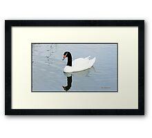 """"""" A smart looking Bird"""" Framed Print"""