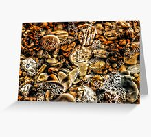 Bubbly Shells Greeting Card