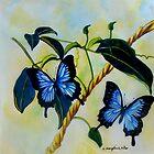 Dancing Butterflies colour pencils and pens by sandysartstudio