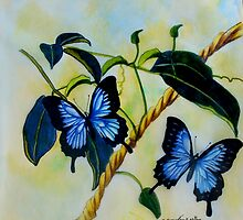 Dancing Butterflies colour pencils and pens by sandysartstudio