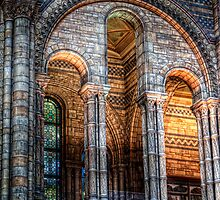 NHM Arches by Alan E Taylor