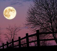 November Moon by jimcrotty