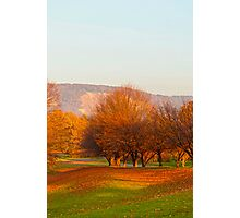 Rheinaue Park  Photographic Print
