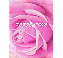 Pink Rose Perfection Photographic Print