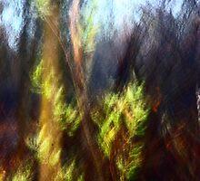 Don't let summer end - Irwin Prairie Nature Preserve by Mitch Labuda