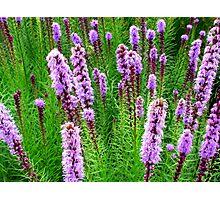 Purple Missles Photographic Print