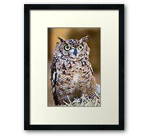 Spotted Eagle-owl (Bubo africanus) Framed Print