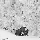 this old barn by dc witmer