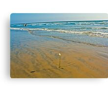 Huntington beach rose Canvas Print
