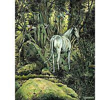 Unicorn & Pixies Photographic Print