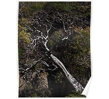 Tree at a rock wall - Arbol en un despeñadero Poster