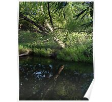 Reflections on a jungle river Poster