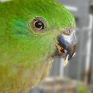 Green Parrot by Sharon Brown