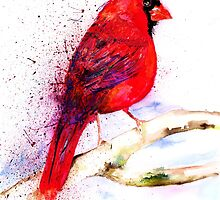 Red Cardinal by IsabelSalvador
