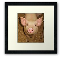 piggy nose piggy  Framed Print