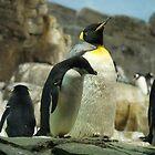 Penguin pride! by Rachelo