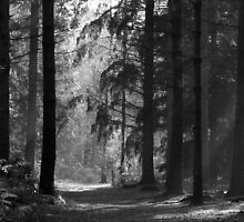 woodland walk in black and white by Penny Rumbelow