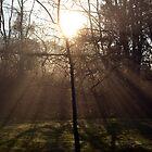 New Dawn fades by hamptonsgateway