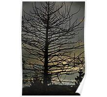 Dead Tree at Dusk Poster