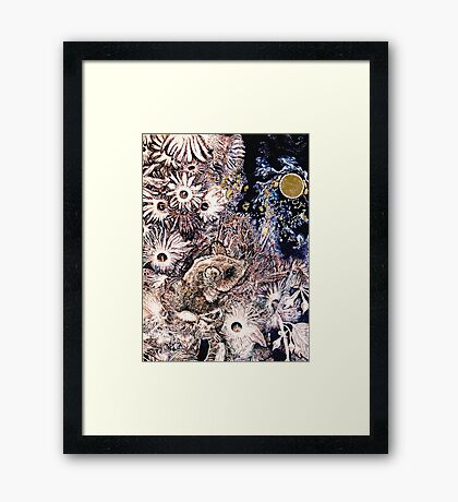 The Feathertail Glider & The Full Moon. Framed Print