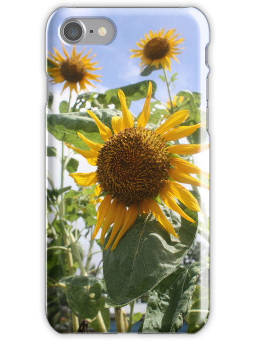 Sunflower iPhone iPod Cover by Bami