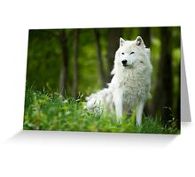 Arctic Wolf Shedding Winter Coat Greeting Card