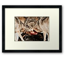 Eye of the Alpha Framed Print