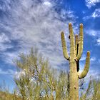 Desert Cactus 2 by Anthony Sapone