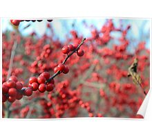 Berries in a Tree Poster