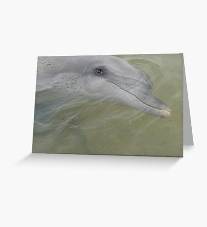 Dolphin at Monkey Mia,  Greeting Card