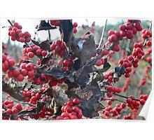 Berries 2 Poster