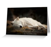 Tranquilty of the Arctic Wolf  Greeting Card